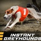 Instant Greyhound Races
